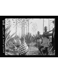 Plantations in Kenya Colony. Sisal Plant... by Matson Photo Service